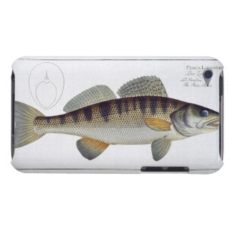 Pike-Perch (Perca lucioperca) plate LI from 'Ichth iPod Touch Case