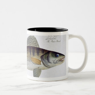 Pike-Perch (Perca lucioperca) plate LI from 'Ichth Two-Tone Coffee Mug