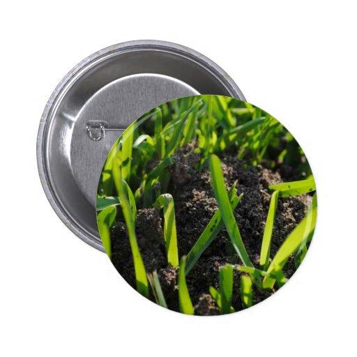 Pila de la hormiga pin