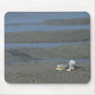 Pila del Seashell Alfombrillas De Ratones