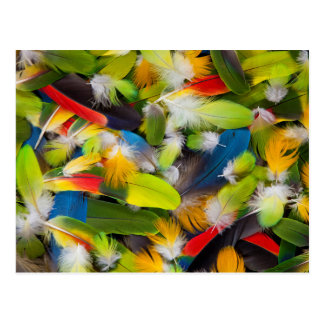 Pile of colorful feathers postcard