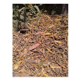 Pile of dried leaves and grass postcard