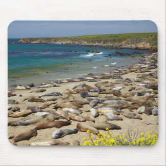 Pile of Elephant Seals Mouse Pad