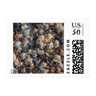 Pile Of Seashells Postage