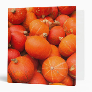 Pile of small pumpkins, Germany 3 Ring Binder