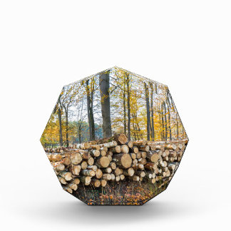 Pile of tree trunks in fall forest.JPG Acrylic Award