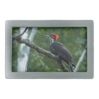 Pileated Woodpecker at Acadia National Park Rectangular Belt Buckles