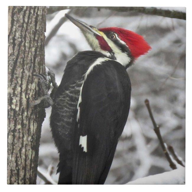 Pileated Woodpecker Bird Ceramic Tile