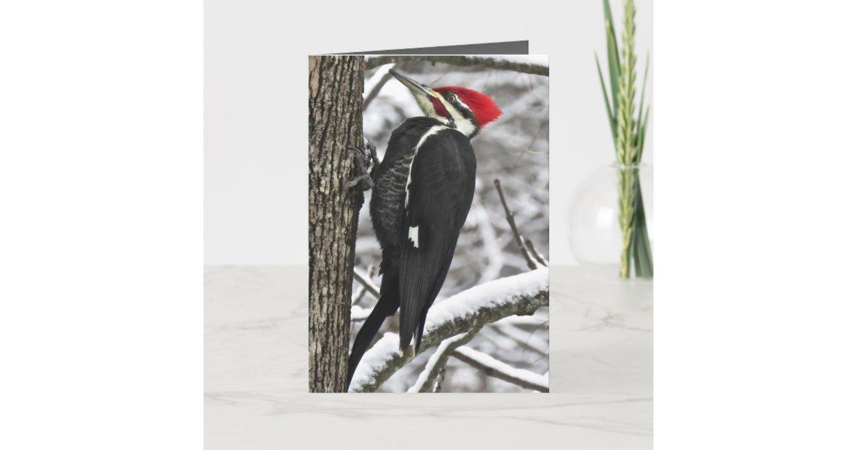 Woodpecker Love Card Greeting Card I Love You Card
