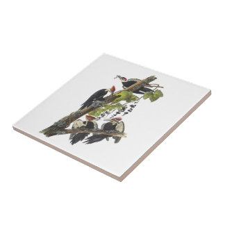Pileated Woodpecker by Audubon Small Square Tile