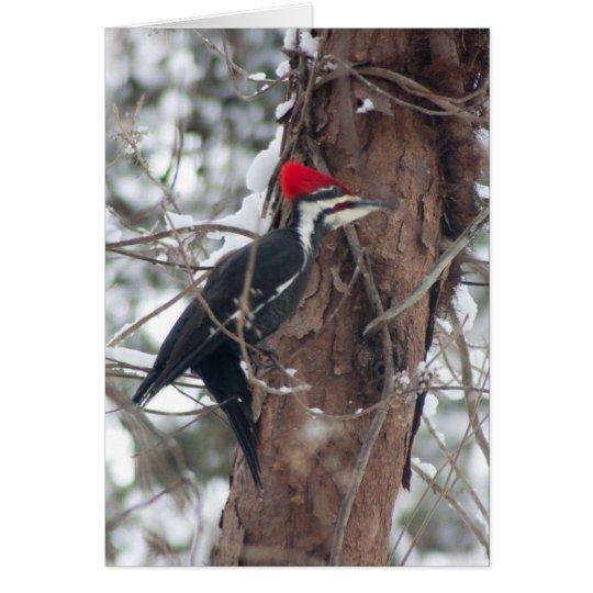 Pileated Woodpecker Card