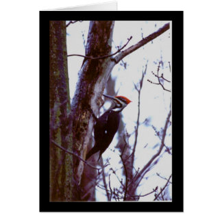 Pileated Woodpecker Cards