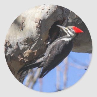 Pileated Woodpecker Classic Round Sticker