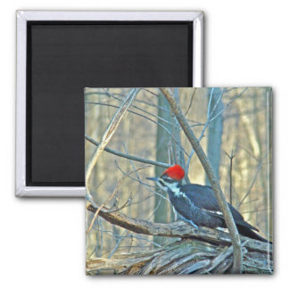 Pileated Woodpecker Coordinated Items Magnet