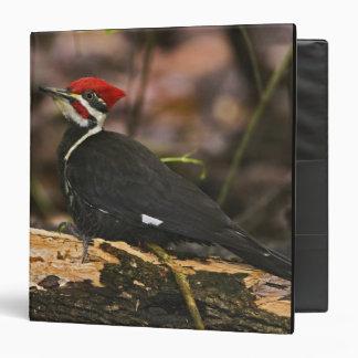 Pileated Woodpecker, Dryocopus pileatus, Binder