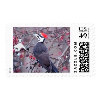 Pileated Woodpecker In Winter Postage Stamp