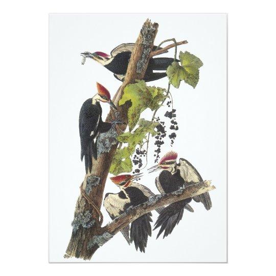 Pileated Woodpecker, John Audubon Card