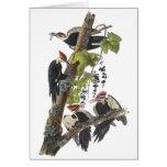Pileated Woodpecker, John Audubon Cards