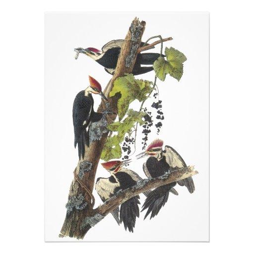 Pileated Woodpecker, John Audubon Personalized Announcement