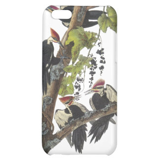 Pileated Woodpecker, John Audubon Cover For iPhone 5C