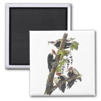 Pileated Woodpecker, John Audubon 2 Inch Square Magnet