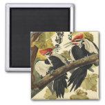 Pileated Woodpecker, John James Audubon 2 Inch Square Magnet