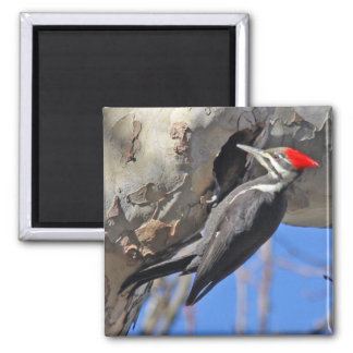 Pileated Woodpecker Magnet