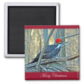 Pileated Woodpecker Merry Christmas Items Magnet