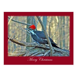 Pileated Woodpecker Merry Christmas Items Postcard