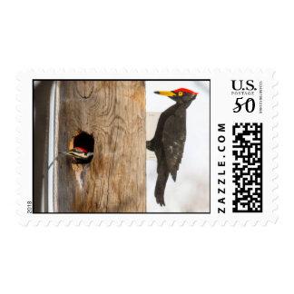 Pileated Woodpecker Postage