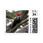 Pileated Woodpecker Postage Stamp Postage Stamp