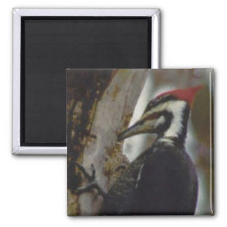 Pileated Woodpecker Refrigerator Magnet