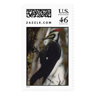 Pileated Woodpecker Stamp