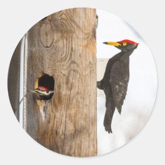 Pileated Woodpecker Sticker