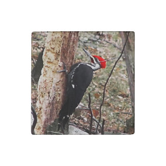 Pileated Woodpecker Stone Magnet