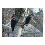 Pileated Woodpeckers Card