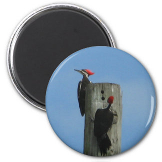 Pileated Woodpeckers Magnet