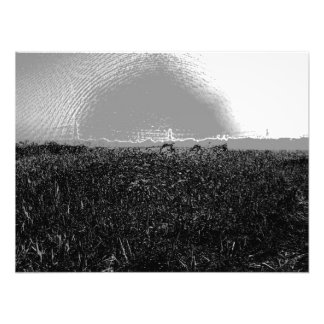 Piles of dry grass stretch into the distance photographic print