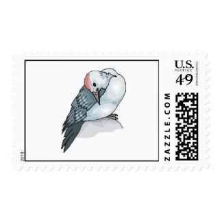 Pilla Pigeon png