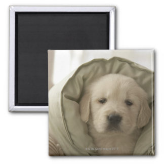 Pillow around dog 2 inch square magnet