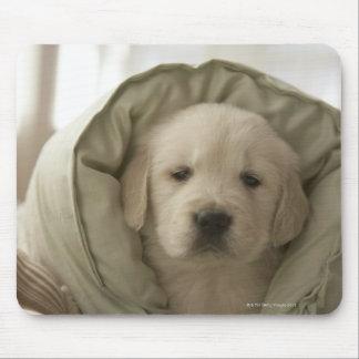 Pillow around dog mouse pad