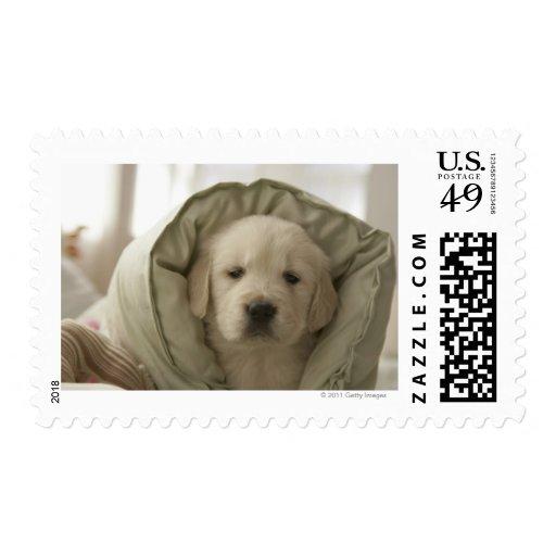 Pillow around dog postage