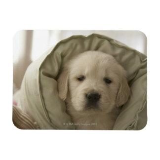 Pillow around dog rectangular photo magnet