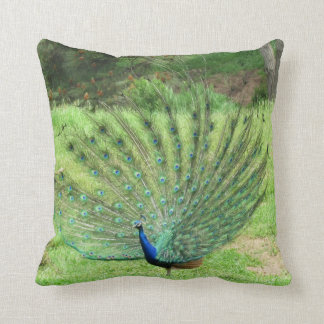 Pillow - Peacock
