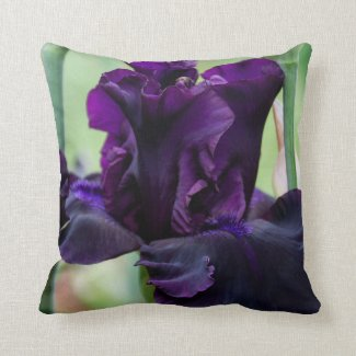 Pillow with Iris that you must touch.