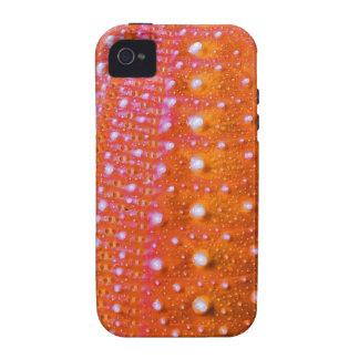 Pilluelo-Coral del mar Vibe iPhone 4 Fundas