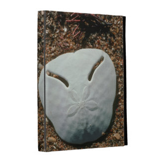 Pilluelo de Shell del pensamiento (Echinodiscus