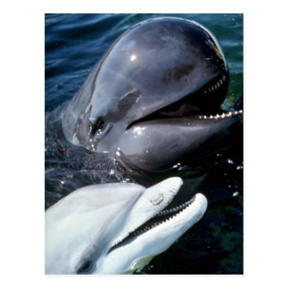 Pilot whale and Atlantic bottlenose dolphin Postcard