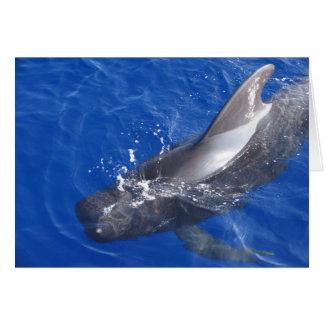 Pilot Whale in Hawaii Card