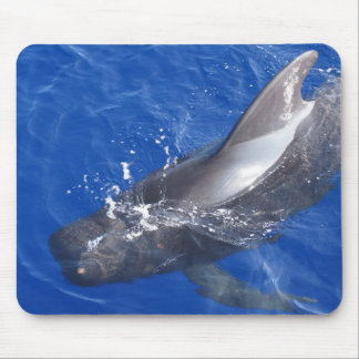 Pilot Whale in Hawaii Mouse Pad